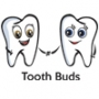 Tooth Buds